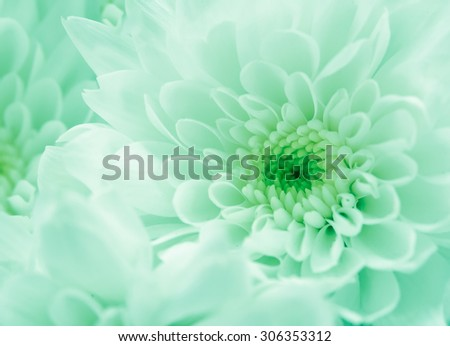 pattern and texture from soft flowers, Abstract blur