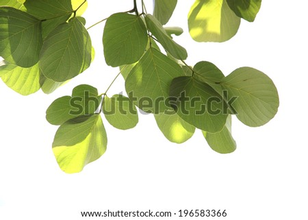 Pattern green leaf isolated on white background.
