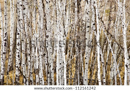 Pattern in Nature - stock photo