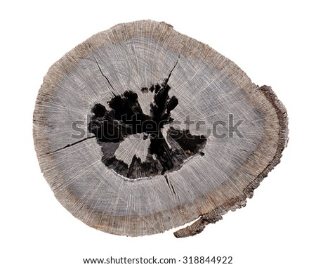 pattern of decay stump on white background - stock photo
