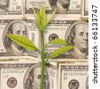 Pattern of 100 dollar bills. Money Background. Concept of a plant. - stock photo