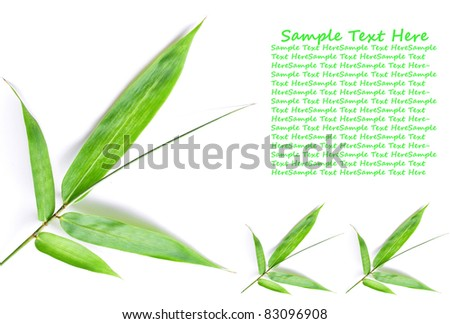 Pattern of green bamboo leaf for background