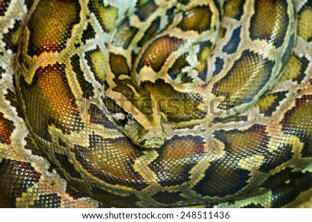 Pattern of  green burmese python. - stock photo