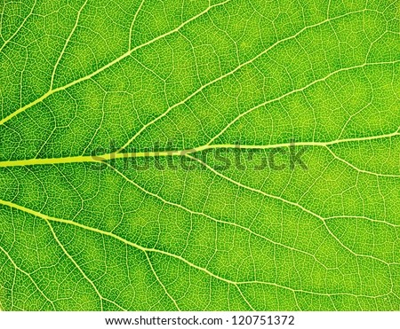 Pattern of green growing leaf surface - stock photo