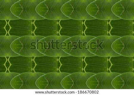 Pattern of leaves. ( art from nature ) part B