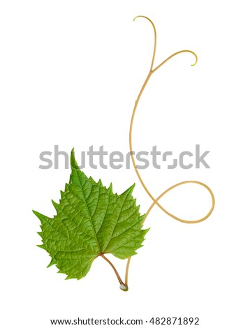 pattern of vine leaves