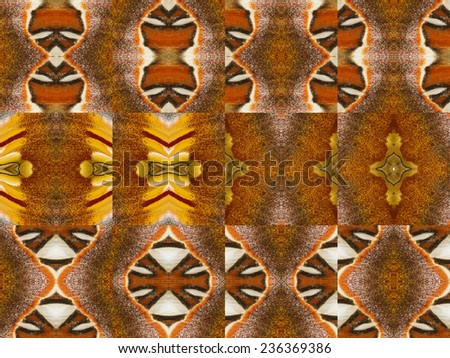 Patterns from colorful butterfly wing with individual clipping path - stock photo