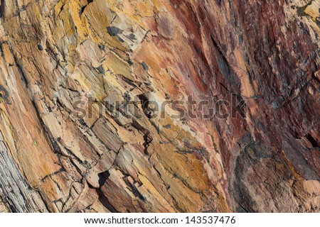 Patterns in Petrified Tree showing colorful mineral deposits that have replaced the wood over millions of years in Petrified Forest National Park. - stock photo