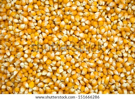 Patterns of seed corn. - stock photo