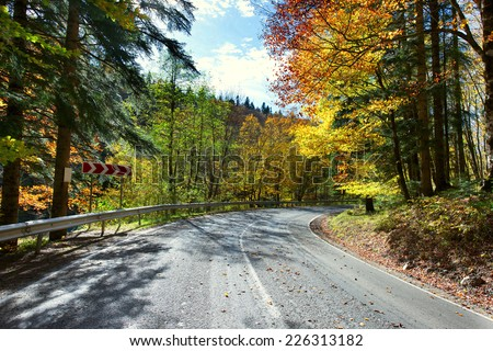 paved road in the autumn forest  - stock photo
