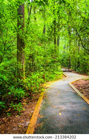 Paved trail through the forest at Table Rock State Park, South Carolina. - stock photo