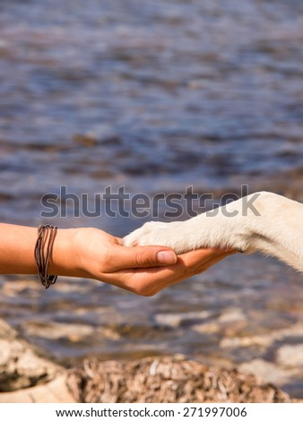 paw in hand, human hand and dog paw - stock photo