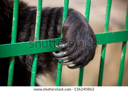 Paw of a bear in a cage close up - stock photo