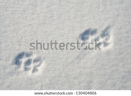paw prints in the snow - stock photo