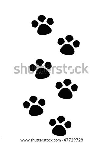 paws - stock photo