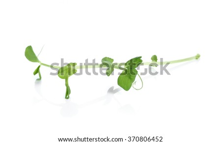 Pea Sprouts on White Background
