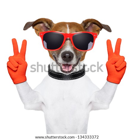 peace and victory fingers dog with red gloves and glasses - stock photo