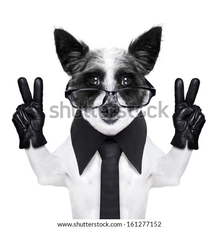 peace  fingers dog with black gloves and glasses - stock photo