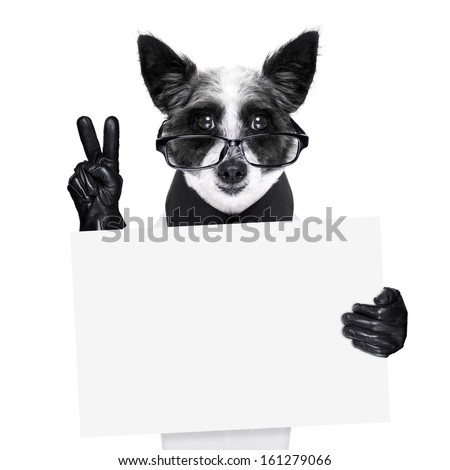 peace  fingers dog with black gloves and glasses holding a banner - stock photo