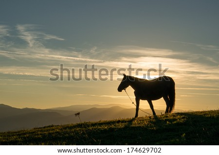 Peaceful background - grazing horses, beautiful sunset, picture for Chinese year of horse 2014