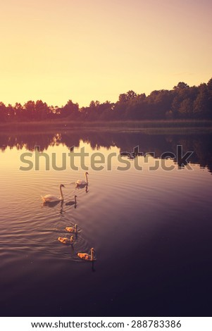 Peaceful Lake in the Evening - stock photo