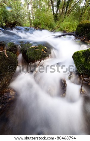 peaceful mountain stream flows through forest