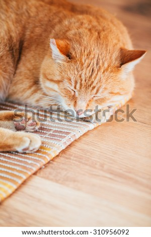 Peaceful Orange Red Tabby Cat Male Kitten Curled Up Sleeping In His Bed On Laminate Floor - stock photo