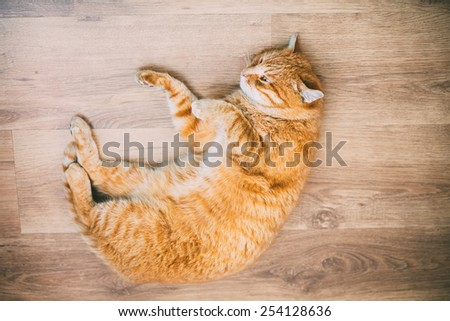 Peaceful Orange Red Tabby Cat Male Kitten Curled Up Sleeping In His Bed On Laminate Floor. Toned Instant Photography - stock photo