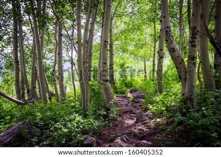 Peaceful Path - stock photo