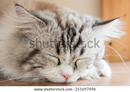 Peaceful red tabby cat curled up sleeping in the house, closeup - stock photo