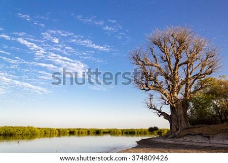 Peaceful scene in Sine Saloum. Senegal, Africa. - stock photo