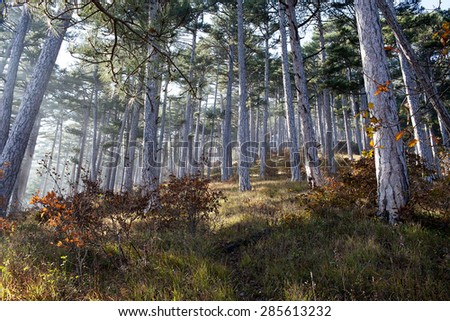 Peaceful view of forest in the Crimean mountains - stock photo