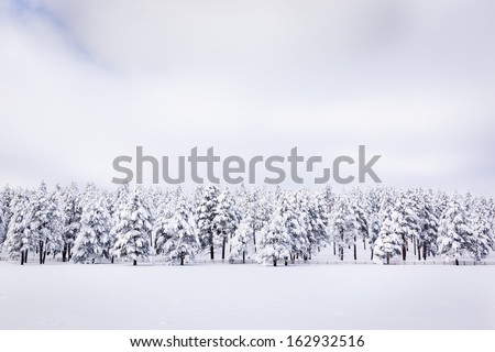 Peaceful Winter Landscape - stock photo