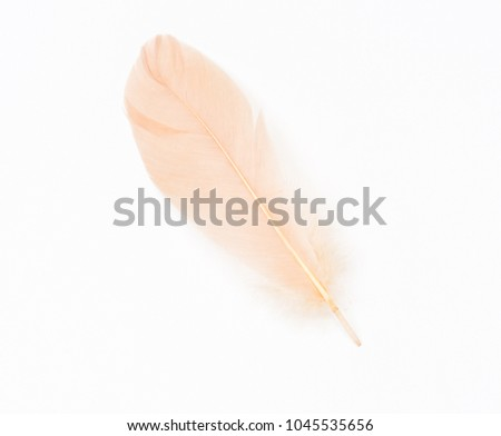 Peach beige feather on a white background