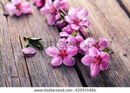 Peach blossom on old wooden background. Fruit flowers. - stock photo
