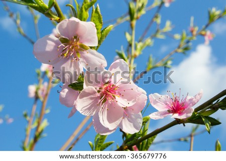 english essay on spring season in pakistan Essay on spring season article shared by introduction spring falls between winter and summer it rules over the months of march and april.