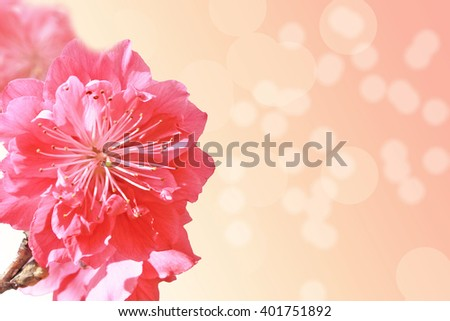 Peach flower on beautiful background.Shallow DOF with wide aperture - stock photo