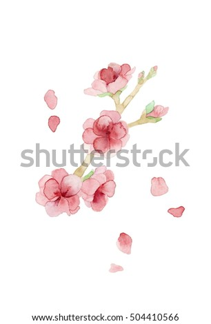 Peach flower,without petals