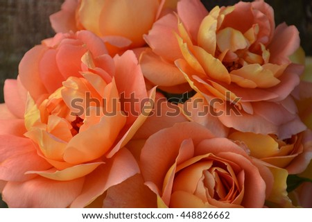 Peach / golden roses