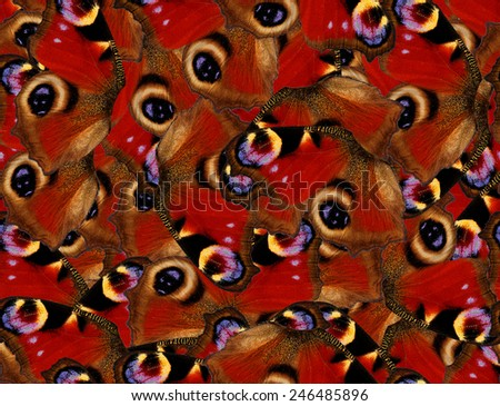 Peacock butterfly seamless pattern 1 - stock photo