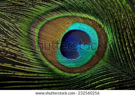 Peacock eye feather - Low key - stock photo