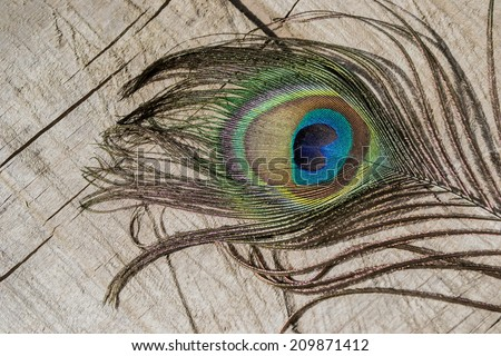 peacock feather, bird, peacock, decoration, home, home, country, colors, blue, green, brown, purple, colorful jewelery, adornment, fashion, style, - stock photo