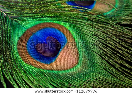 peacock feather close-up on black background - stock photo