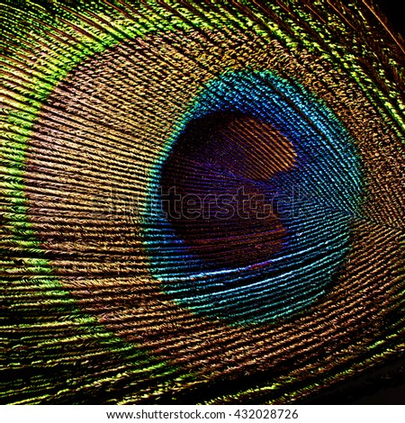 peacock feather isolated on black background - stock photo