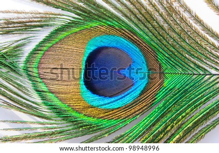 peacock feather on a white background close-up - stock photo