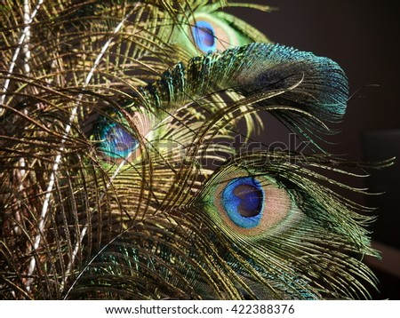 Peacock feathers on a black background. - stock photo