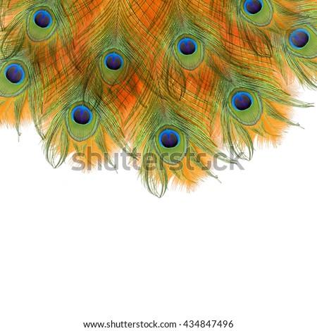 Peacock feathers. Peacock. India - stock photo