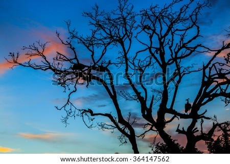 Peacock standing in a tree during the sunset - stock photo