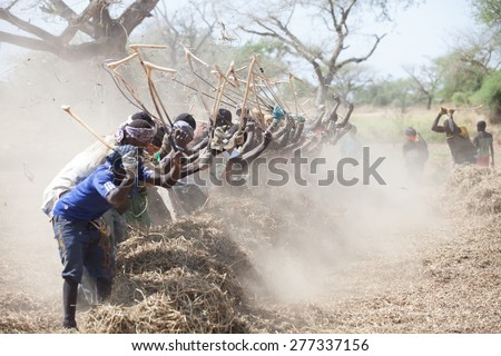 Peanut pickers in country, Seine de Saloium, Senegal, November 2012 - stock photo