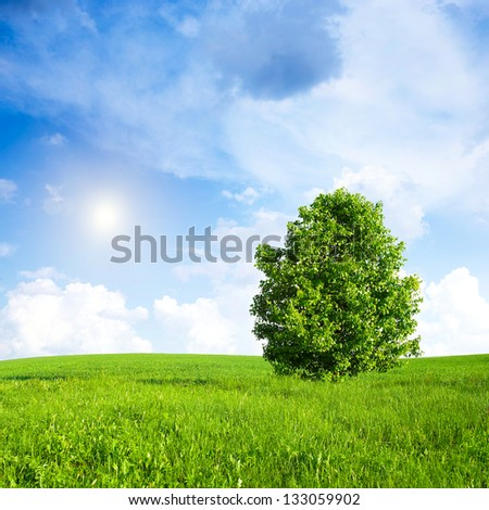 Pear tree on the green grass against the blue sky and clouds